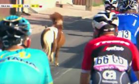 Niespodziewany uczestnik na trasie Tour de Pologne [WIDEO]