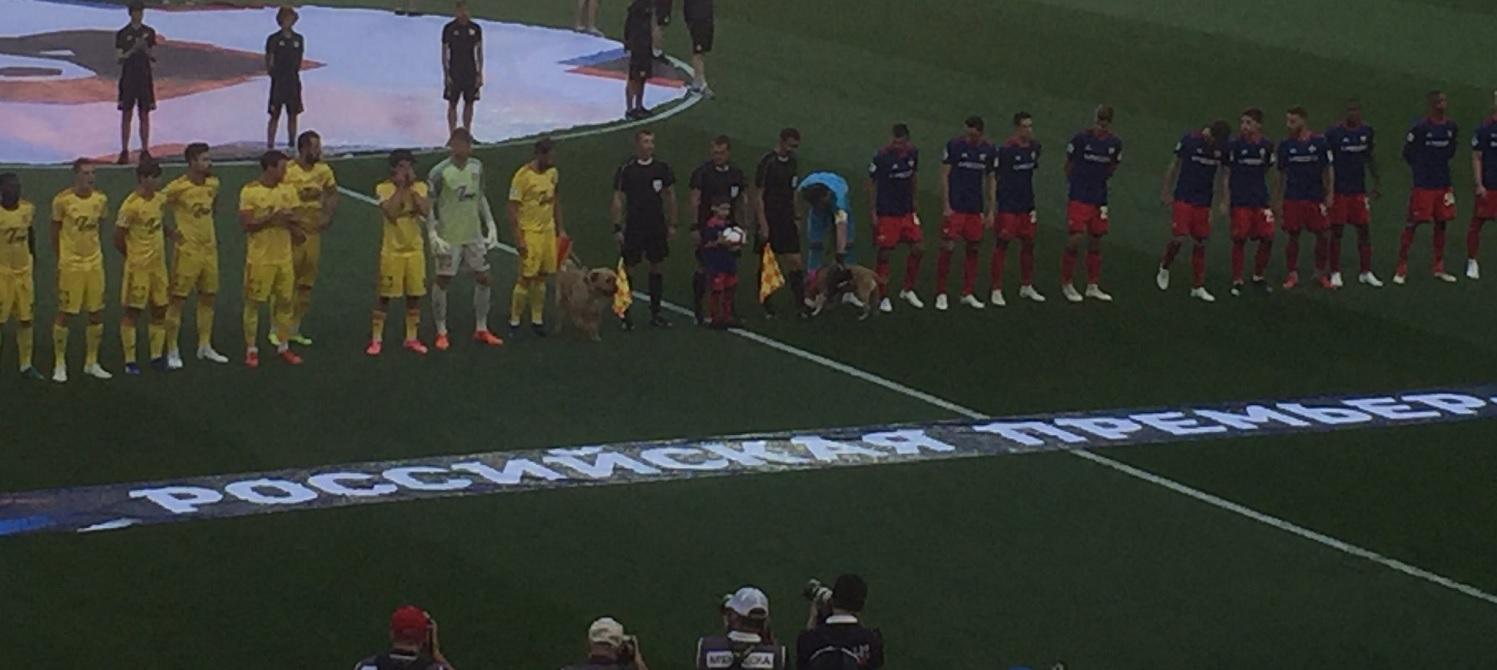 Kapitanowie CSKA i Arsenału wyszli na mecz z psami ze schroniska