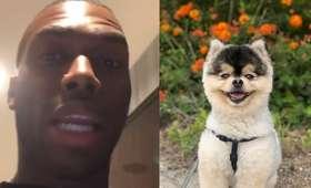 Danielowi Sturridgeowi skradziono psa
