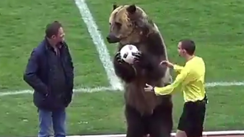 Niedźwiedź ma otworzyć MŚ 2018